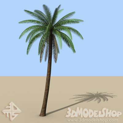 3D Palm Tree 01 Main Image